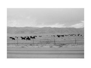 elaine-mayes-autolandscapes08